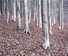 IlPost - © Daniel Kovalovszky, Green Silence - © Daniel Kovalovszky, Green Silence
