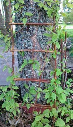 Luontovakan pajutikapuut tueksi kasveillesi tai koivun koristeeksi