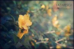 by Lazarescu R. Catalin on Pastel, Nature, Plants, Beautiful, Cake, Naturaleza, Plant, Nature Illustration, Off Grid