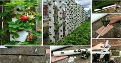 Vertical Gardens 27 Clever Gardening Hacks and Tricks That You Never Thought Of - Proper gardening will save you a lot of time and money. Take a look at 27 creative gardening hacks below and apply them to your garden. Strawberry Tower, Strawberry Planters, Strawberry Garden, Jardim Vertical Diy, Vertical Garden Diy, Vertical Gardens, Vertical Planter, Vertical Farming, Hydroponic Gardening