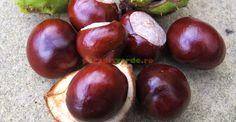 Natural Remedies, Diabetes, Flora, Paradis, Fruit, Therapy, Diet, Varicose Veins, Plant