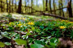 Törékeny szépség...Long-erdő természetvédelmi terület,Sárospatak környékén... Plants, Planters, Plant, Planting