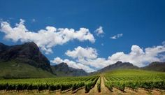 Taste the glorious South African Wines at one of our distinct wine estates in and around Cape Town South African Wine, Wine Tourism, Cape Town South Africa, Touring, Vineyard, City, World, Wineries, Outdoor