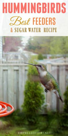 How To Make Hummingbird Food And Choose The Best Hummer Feeder Gardening Birding