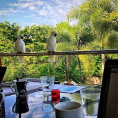 Places I work update. Got two new colleagues waiting for instructions - #kakadu #business #hamiltonisland