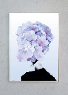 Hortensia #1 fra Martin Moore
