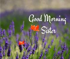 Looking for Good Morning Wishes for Sister? Start your day by sending these beautiful Images, Pictures, Quotes, Messages and Greetings to your Sis with Love. Good Morning Friday, Good Morning Gif, Good Morning Picture, Good Morning Wishes, Good Morning Quotes, Morning Sayings, Prayers For Sister, Wishes For Sister, Love My Sister