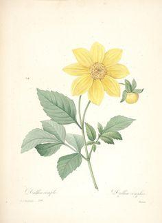 https://flic.kr/p/cXP4gL | n153_w1150 | Choix des plus belles fleurs :. Paris :Ernest Panckoucke,[1833?].. biodiversitylibrary.org/page/12695554