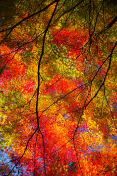 ~~Autumn Leaves ~ Nara Prefecture Gose Aun Temple, Japan by さす~~
