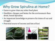 Did You Know…  Spirulina grows by 25% of its own weight EVERY DAY!!!  5g per day is enough to cover all of your daily nu...