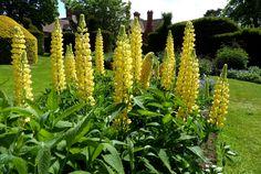 https://flic.kr/p/u7bLxW | Wightwick Manor Gardens | Wolverhampton