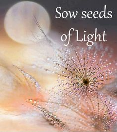 Sow seeds of Light
