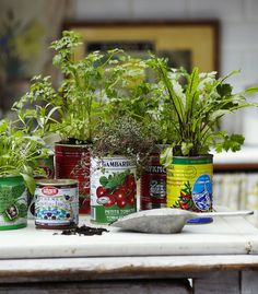 Lets All Plant in Tin Cans | Happy House and Garden Social Site