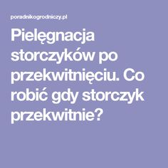 Pielęgnacja storczyków po przekwitnięciu. Co robić gdy storczyk przekwitnie? Indoor Garden, Garden Plants, Home And Garden, Orchid Varieties, Good Advice, Flower Power, Life Hacks, Have Fun, Projects To Try