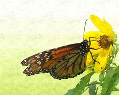 Monarch Butterfly by Charlee M. Fischer