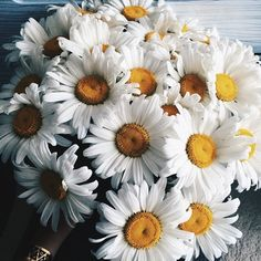 Find images and videos about white, flowers and daisy on We Heart It - the app to get lost in what you love. My Flower, Wild Flowers, Beautiful Flowers, Daisy, All The Bright Places, Plants Are Friends, No Rain, Mellow Yellow, Planting Flowers