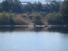 The pond near the eastside off-leash dog park, Casper, Wyoming