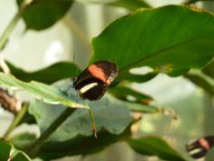 Butterfly Garden in Monteverde.