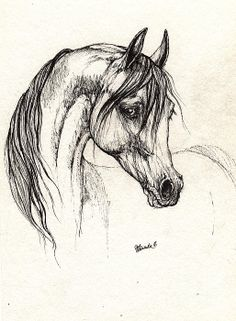Arabian Horse Drawing 28