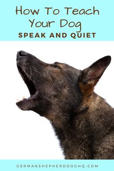 Training your dog to speak and quiet are very useful commands that are easy to teach any dog. For vocal dog breeds like the German Shepherd, training your dog to speak, actually helps in teaching them how to be quiet. Learn the easy steps to teaching your Dog Training Courses, Best Dog Training, Training Pads, Crate Training, Training Classes, Potty Training, Obedience Training For Dogs, Protection Dog Training, Dog Commands Training