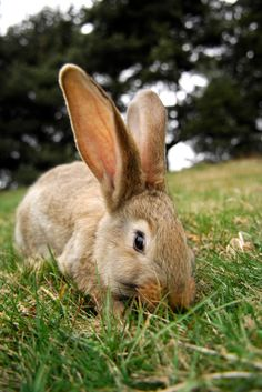 istock_rabbit_grass