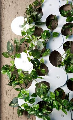 Trifoglio is a modular system that supports climbing plants as they grow on inside and outside walls – like a modern trellis. It can even be used as a room divider.