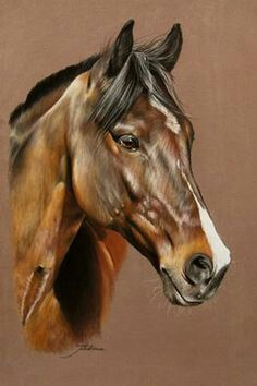 Horses are an Excellent subject to Draw as you can see for yourself. Horse Drawings, Animal Drawings, Pretty Horses, Beautiful Horses, Arte Equina, Horse Sketch, Horse Artwork, Horse Portrait, White Horses