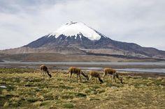 Parinacota, Lauca National Park. North of Chile.