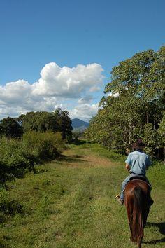 Randonnée à cheval dans la brousse, Nouvelle-Calédonie.