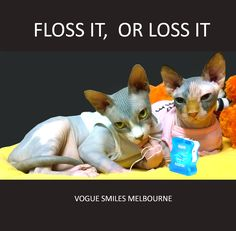 Zucky and Zooky Funny Cat Photos, Cute Animal Photos, Funny Cute Cats, Dental Humor, Dental Services, Sphynx Cat, Captions, Ecommerce, Melbourne