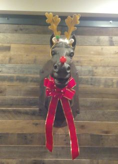 This is hanging in our hotel bar... A horse head dressed as Rudolph #Followme #CooliPhone6Case on #Twitter #Facebook #Google #Instagram #LinkedIn #Blogger #Tumblr #Youtube