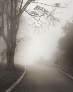 landscape photography fog foggy trees foggy by NicholasBellPhoto