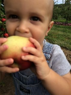 """- - - For the past week we have been using the promise of """"Apple Picking"""" as a means of control over our kids bad behavior. """"If you guys want to go apple picking, you had better start listening!"""" """"Dylan quit sitting on your brothers head, you're mashing the poop in your diaper....and t... Best Start, 4 Year Olds, Our Kids, Behavior, Daddy, The Past, Apple, Guys, Behance"""