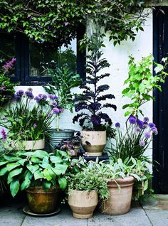 you only have a small garden, courtyard or balcony, experimenting with container gardening is worth a thought.If you only have a small garden, courtyard or balcony, experimenting with container gardening is worth a thought. Lake Garden, Backyard Garden Design, Balcony Garden, Backyard Ideas, Potted Garden, Indoor Garden, Home And Garden, Back Gardens, Small Gardens