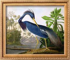 "Louisiana Heron from ""Birds of America"" Giclee Print by John James Audubon at Art.com"