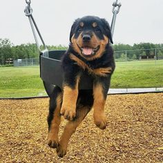 See more Rottwiler Dogs Troll Face Photos . Follow Us!