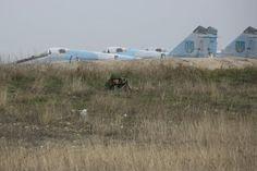 Russian soldiers in Crimea