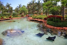 Discover the best things to do in Atlantis, Bahamas! From the thrilling waterpark to the relaxing spa, there is no shortage of amazing activities on Paradise Island. Atlantis Resort Bahamas, Bahamas Resorts, Bahamas Vacation, Nassau Bahamas, Stuff To Do, Things To Do, Marina Village, Travel Oklahoma, Paradise Island