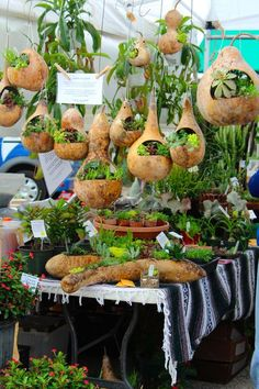 Gourd Planters   Diana's Designs Austin