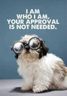 I am who I am. Your approval is not needed. So jump in the dating pool, paws first! #mustlovedogs http://www.youmustlovedogsdating.com