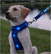 light up dog harness