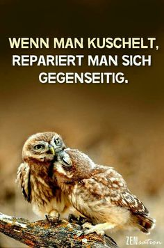 If you cuddle, you repair each other . - : If you cuddle, you repair each other . Cool Slogans, Sense Of Life, Smart Quotes, Cool Pets, Man Humor, Make Me Smile, Cuddling, About Me Blog, Animals