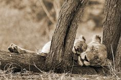 "Africa | ""An unbreakable bond"".  Kruger National Park, South Africa 