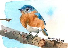 ACEO Limited Edition Bluebird on the branch in by annalee377, $4.00
