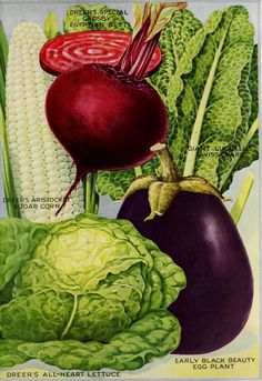 garden seed catalogs. Ferry-Morse Bibb Or Limestone Lettuce Butterhead Seed | Catalog - Vegetable Garden Pinterest Seeds And Ps Catalogs