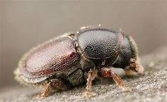 Insects, Animals, Animales, Animaux, Animal, Animais