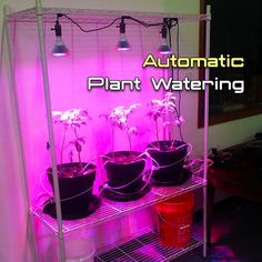 Hydroponic Gardening Ideas Automatic Plant Watering System with Arduino - Have trouble remembering to water those tomatoes? Want to go on vacation but fear the worst for your container garden if you do? Fear no more with an automatic pl. Hydroponic Farming, Hydroponic Plants, Hydroponic Growing, Aquaponics System, Growing Plants, Hydroponics, Aquaponics Garden, Indoor Aquaponics, Aquaponics Fish