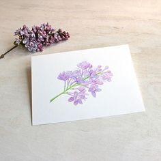 Bring the spring indoors with this sweet image of a lilac sprig! I cut a sprig from my garden and painted it while enjoying its lovely scent. Lovely, soft tones