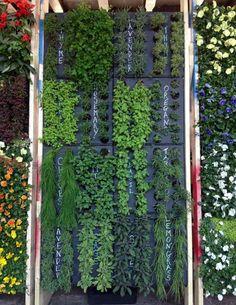 jardin avec herbes fraiches pour petit espace                                                                                                                                                                                 Plus