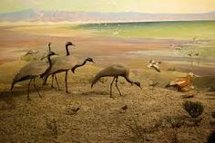 Image result for natural history museum birds
